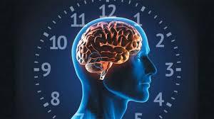 الساعة البيولوجية